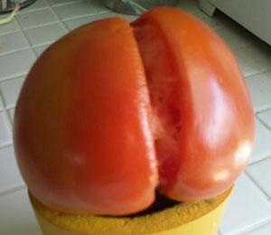 tomato_ass